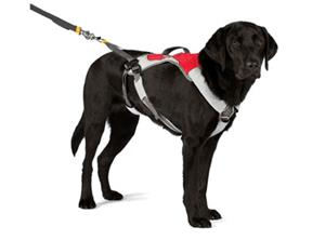Dog Leashes & Harness