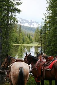 Trail & Pleasure